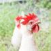 Egg Nutrition 201: Battery Cage, Cage-Free, Free-Range, Organic, Pasture-Raised